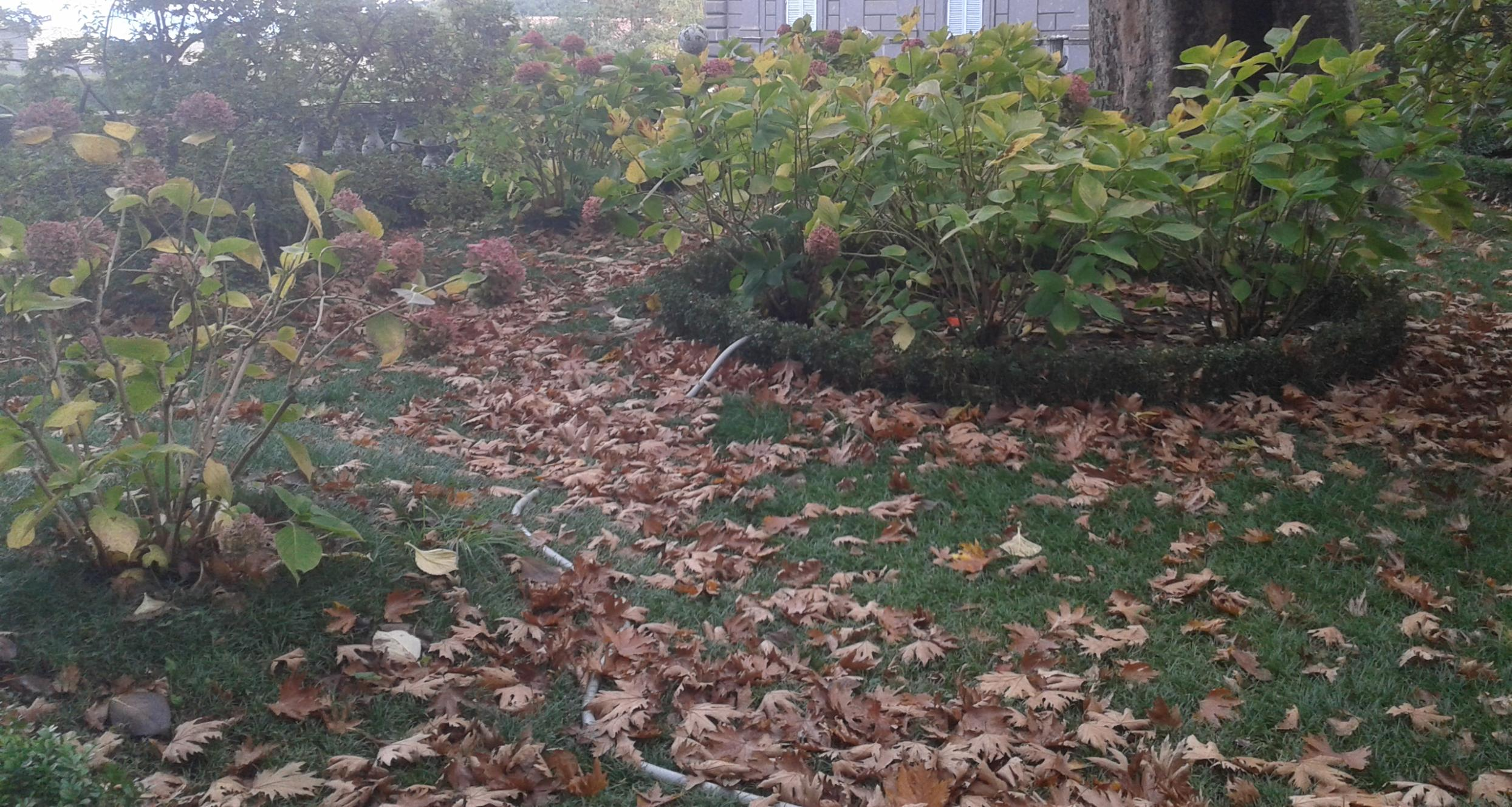 I lavori in giardino nel mese di novembre arriva il - Lavori in giardino ...