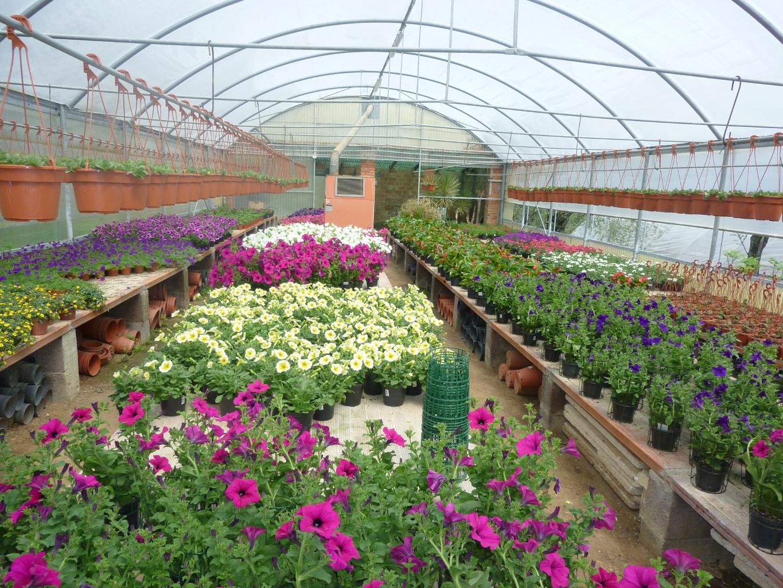 i nostri vivai di piante fiori nel chianti