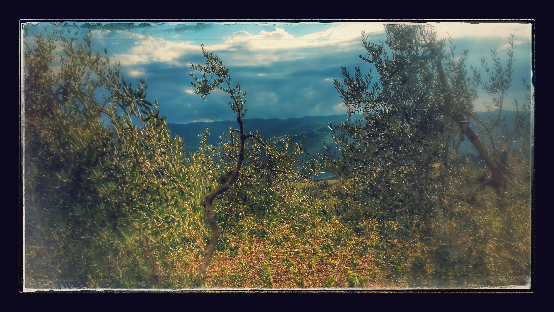 lavori orto e giardino ottobre